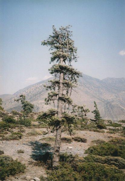 vd-tree-hd-003-c961f