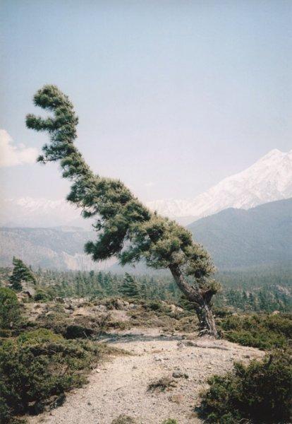 vd-tree-hd-006-ee549