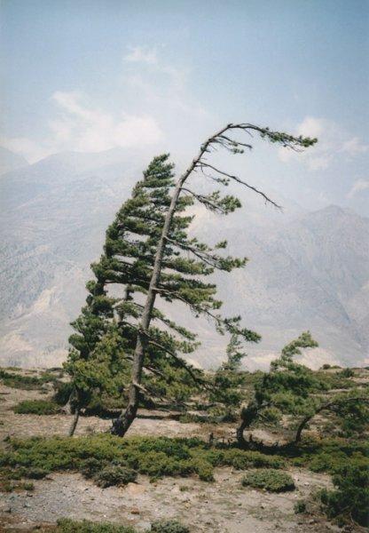 vd-tree-hd-009-de143