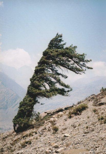 vd-tree-hd-010-b7f0a