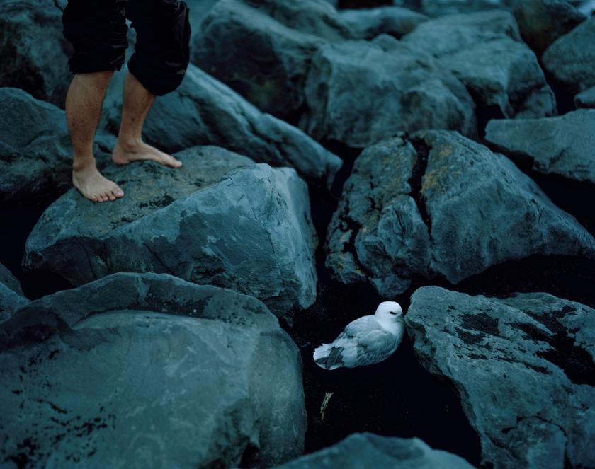 greg-seagull 001